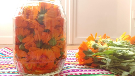 calendula-officinalis2